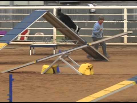 Agility Dog Walk Dogs Test Their Agility Skills