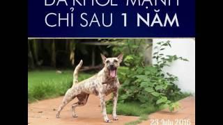 Cách đối xử với chó ở việt nam và nước ngoài ( xem thấy mà thương )