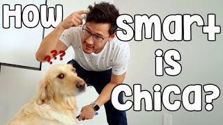 HOW SMART IS CHICA??