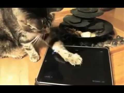 Gatos jugando a aplicaciones para Tabletas y Ipad | Cats and Tablets