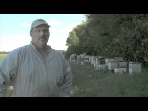 CESO Beekeeping Reverse Assignment (HD)