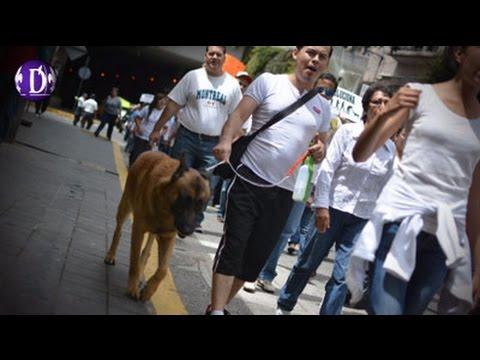 Realizan marcha en contra del maltrato animal en Xalapa