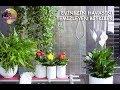 Doğal Hava Temizleyici ve Oksijen sağlayan Bitkiler! Air Purifying House plants ! (ENGLISH CC).mp3