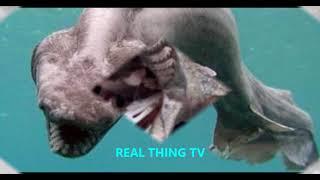 Rare 80 million year old shark species FOUND off Portuguese coast