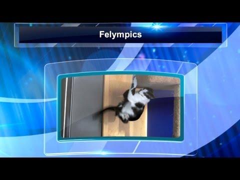 The 2012 Felympics Part 2
