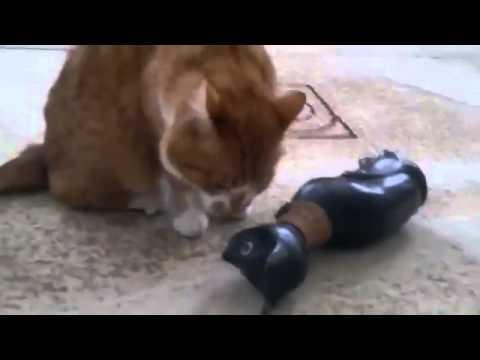 кошки, Смех и только, Новые Приколы, Шутки, Смешные ролики Юмор! Прикол! Смех