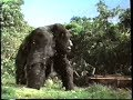 Mighty Joe Young (1998) Teaser (VHS Capture) MP3