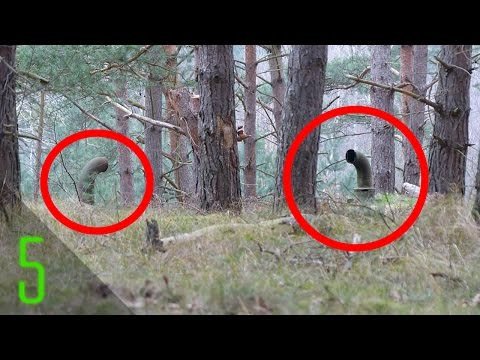 5 Creepiest Things Found in the Woods | Dark5