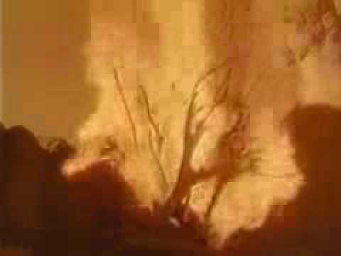 HZ MUSA  4 12  (Dini Film)