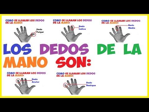 Los Dedos de la Mano y Sus
