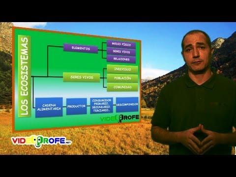 08. Los ecosistemas. 5º Conocimiento del Medio. Videoprofe.net