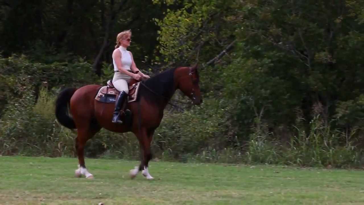 Beautiful Arabian Horses Beautiful Arabian Horse For