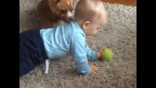 Funny Dogs and Babies Playing Together - Cute dog & baby