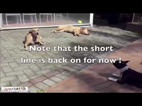 How to Stop Dog Barking-How to Stop a Dog Barking At Other Dogs-How to prevent dog barking