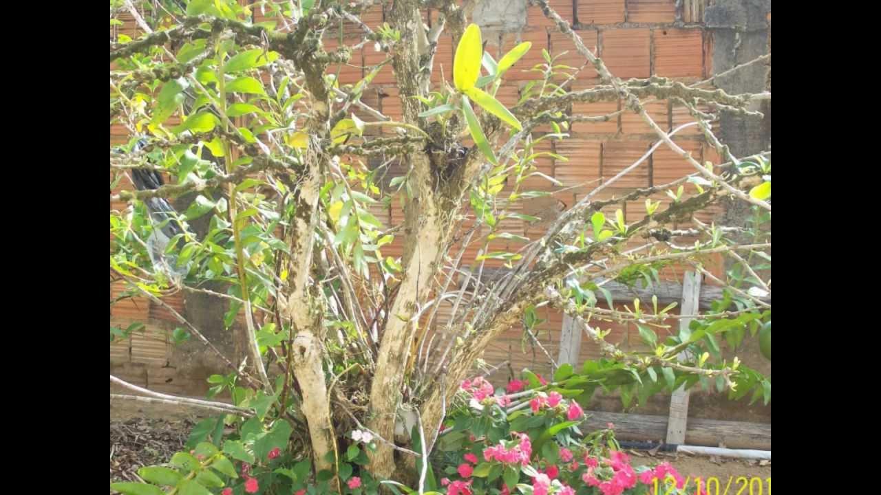 jardim fundo quintal : jardim fundo quintal:NO FUNDO DO QUINTAL  – YouTube