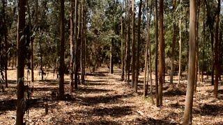 غابات شجرية تروى بمياة الصرف الصحى المعالج