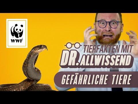 Gefährliche Tiere I  Tierfakten mit Dr. Allwissend I WWF