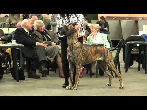 Birmingham National Championship Dog Show 2013 - Working group