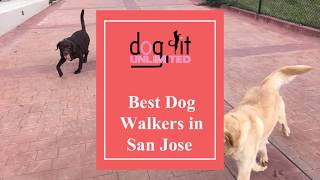 Benefits of hiring a dog walker in San Jose