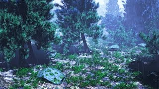 Rain Sounds In Woods For Sleeping Or Studying Rainstorm White Noise 10 Hours