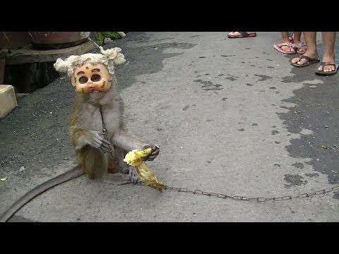Bunga Rampai TiVi 1774 Wearing Mask Monkey Topeng Monyet Desember 2013