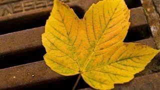 Херсон | Ушакова-Перекопская | Осень ребята, осень.. Victoria S №509