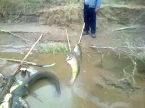 рыбалка на реке лепсы