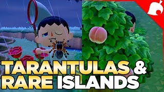 $240,000 of Tarantulas & A Rare Fruit Island in 1 Night! Animal Crossing New Horizons
