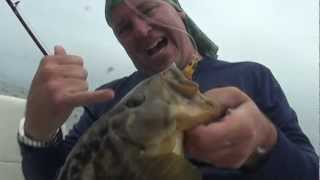 Catalina Island Calico Bass Fishing