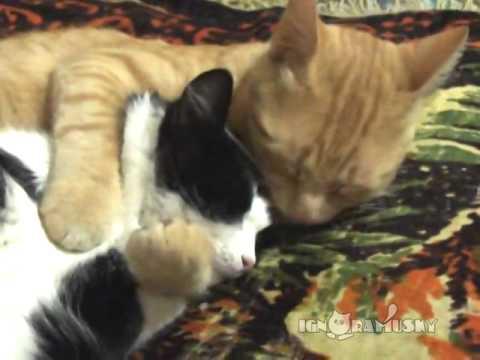 猫たちの愛らしい抱擁
