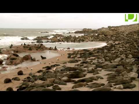 Ciencia salvaje (16/11/13): León marino