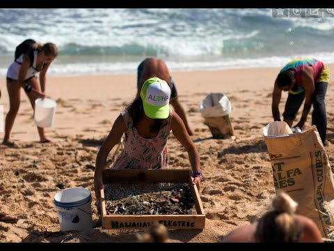 Cleaning Hawaii's Beaches - A Call for Conservation on World Oceans Day- Kahi Pacarro
