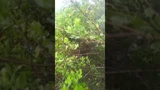 Videos quay lén 8x vào rừng làm bậy
