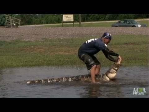 Gators Take Over Flooded Field | Gator Boys