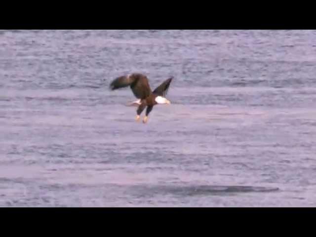 El águila y su renovación, Reflexión narrada por: Hector Herrera