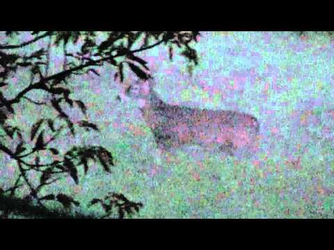 2010 Iowa bow hunting deer, week 2 & 3, Lov na srndaca, srnjak