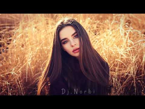Legjobb Disco Zenék 2019 Augusztus Dj.Norbi