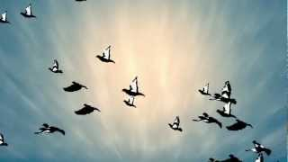 Animated birds flying after effects