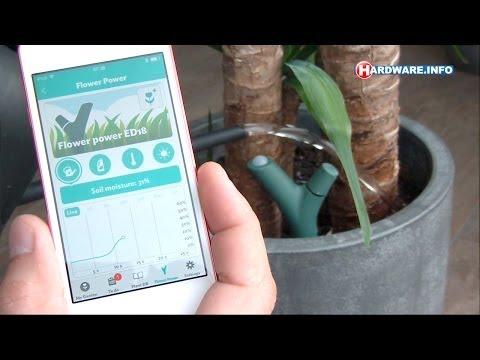 Parrot Flower Power planten-monitor review - Hardware.Info TV (Dutch)