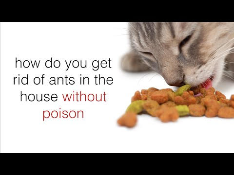 How To Kill Ants Without Pesticides Or Chemicals