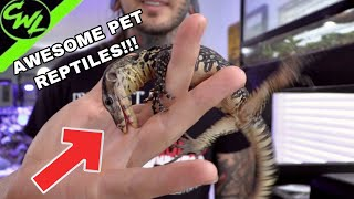 CRAZY EXOTIC PET LIZARDS!!!