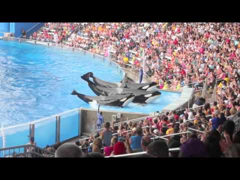 Sea World Orlando - A Summer Day With Sea Life