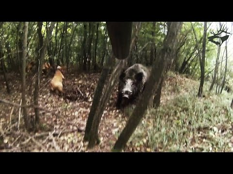 TOP-5 страшных атак кабана на охотника / attack of wild boar 2017
