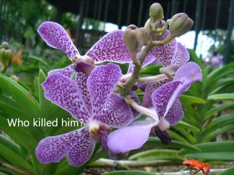 Murder Among The Orchids