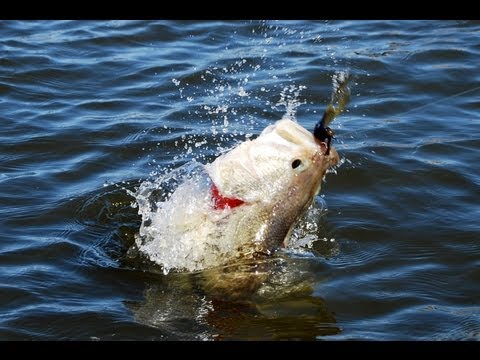 Prespawn Jig Fishing Tips - How to Fish Jigs for Largemouth Bass - Lake Fork  Bass Fishing Report