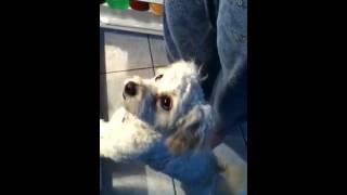 My dog likes ham:)