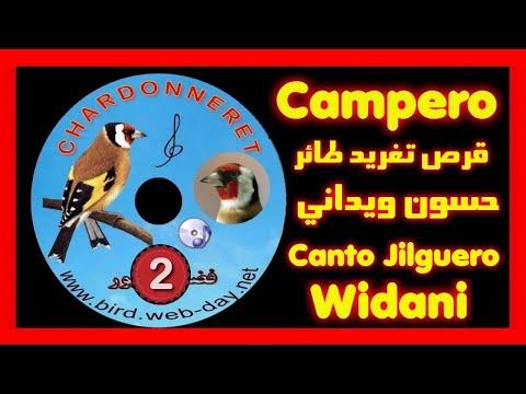 oiseauxspace - cd chant de chardonneret  (widani) 1