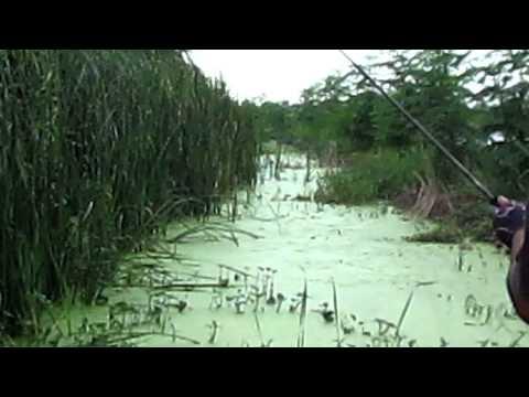 กบหยดน้ำ Angry Frog