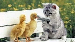 Chó Mèo Hài Hước ✔
