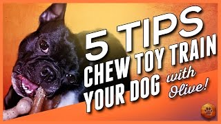 Chew Toy Training - 5 Tips to Chew Toy Train your Dog (w/Olive!)